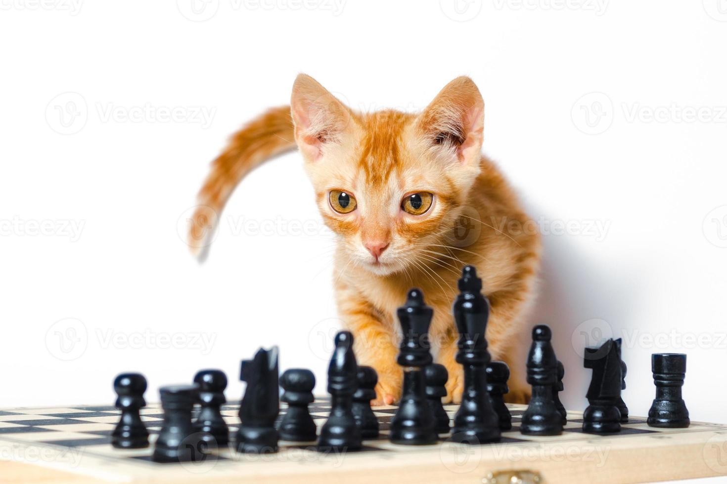 gatito naranja con tablero de ajedrez foto