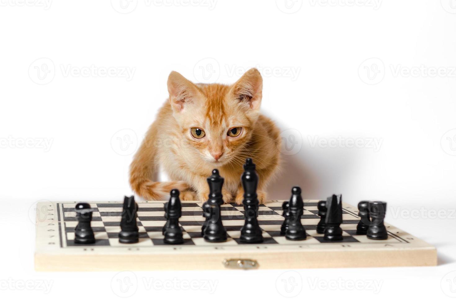 gato naranja con un tablero de ajedrez foto