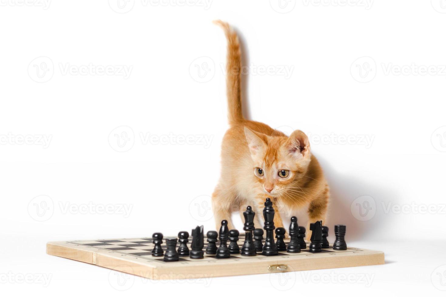 gatito con un tablero de ajedrez foto