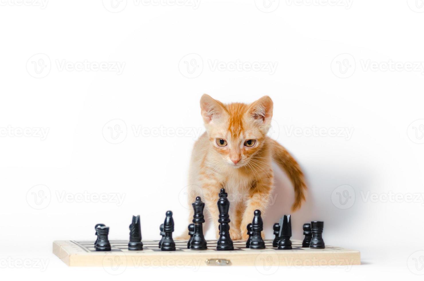 gatito frente a un tablero de ajedrez foto