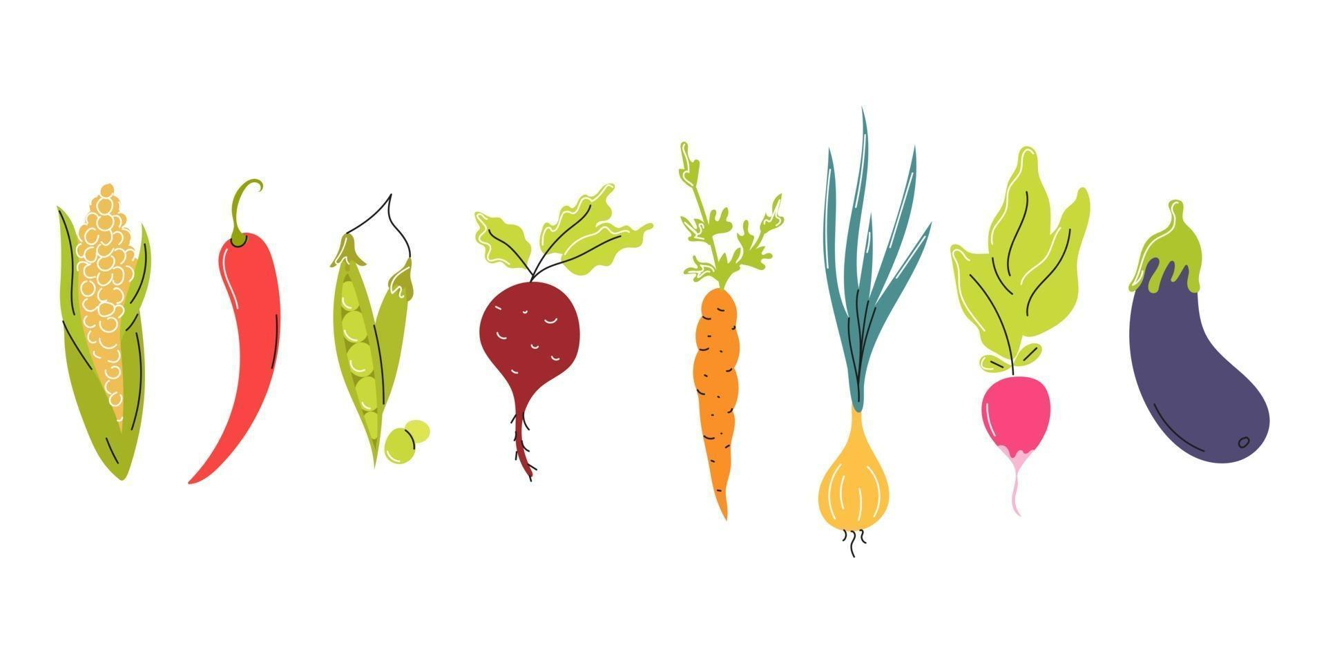 Set of fresh vegetables arranged in a row on a white background. Natural food, vegetarianism. Vector flat image, icon