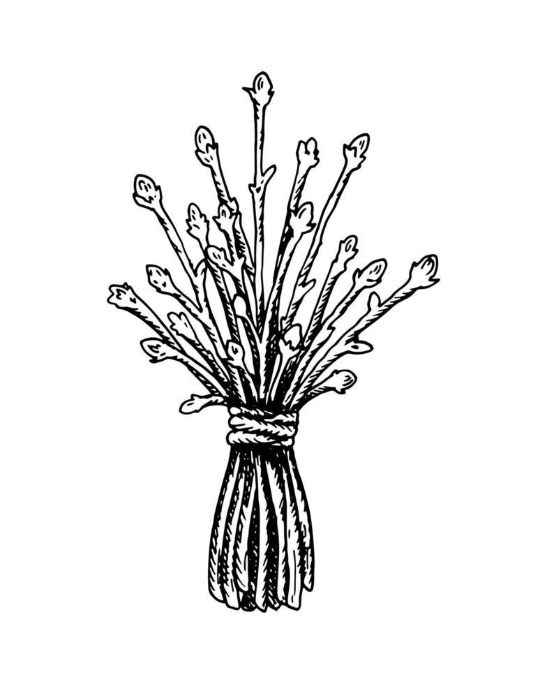manojo dibujado de plantas secas aisladas en blanco. ilustración vectorial en estilo boceto. vector
