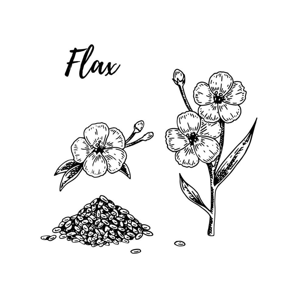 conjunto de semillas, ramas y flores de lino dibujadas a mano. ilustración vectorial en estilo boceto para semillas de lino y envases de aceite vector