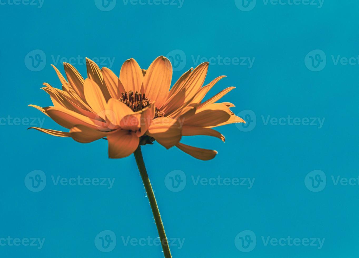 Orange flower against blue sky photo