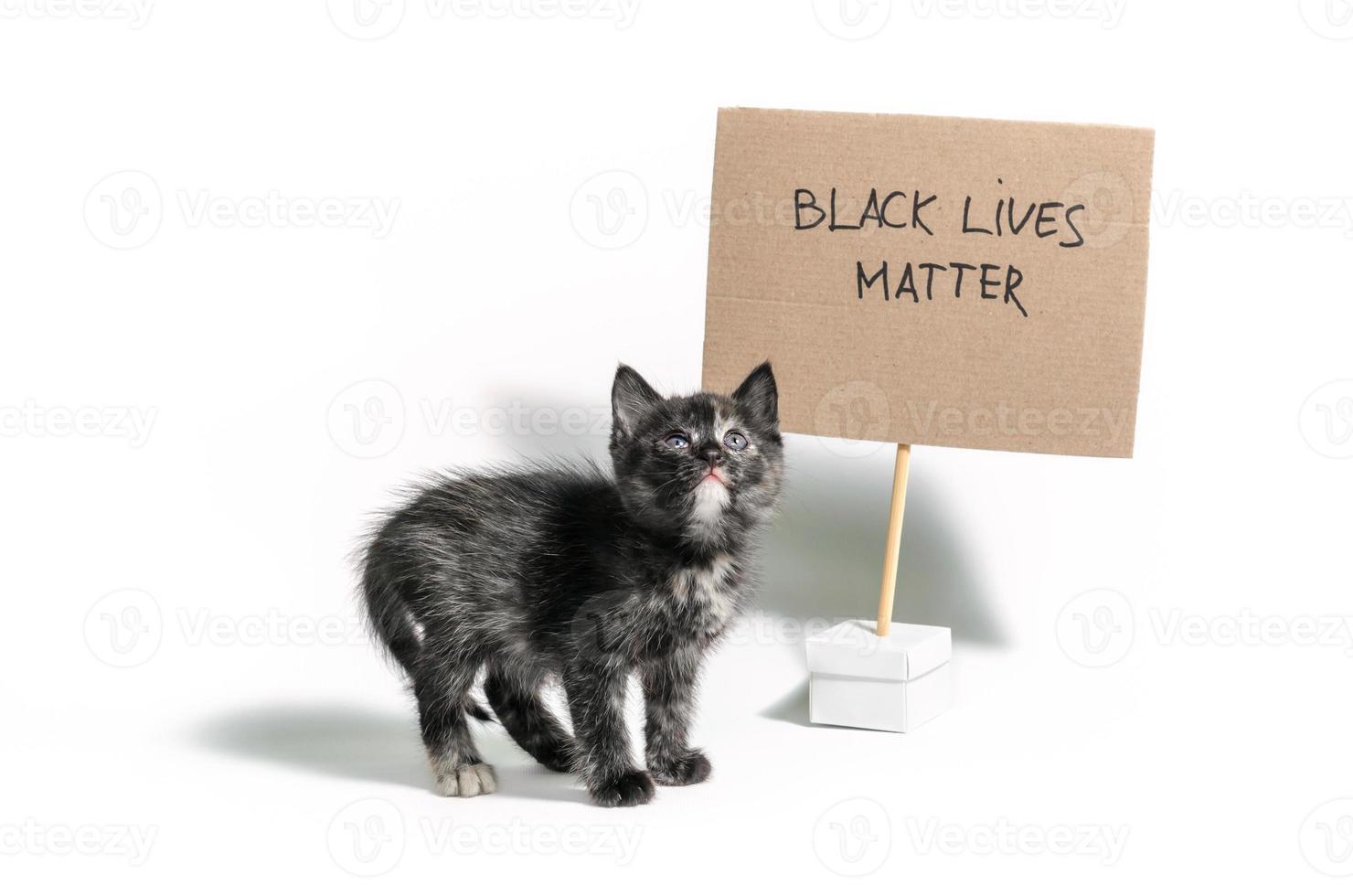 Dark calico kitten with Black Lives Matter sign photo