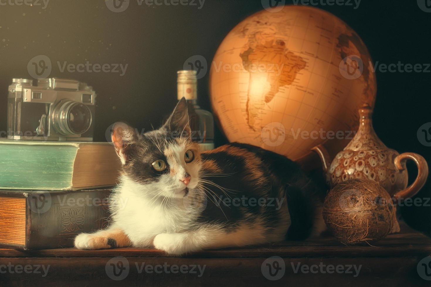 gato con artículos de viaje vintage foto