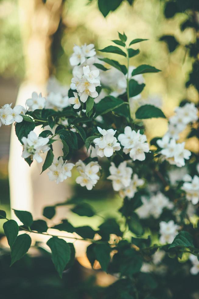hermoso arbusto de flores foto