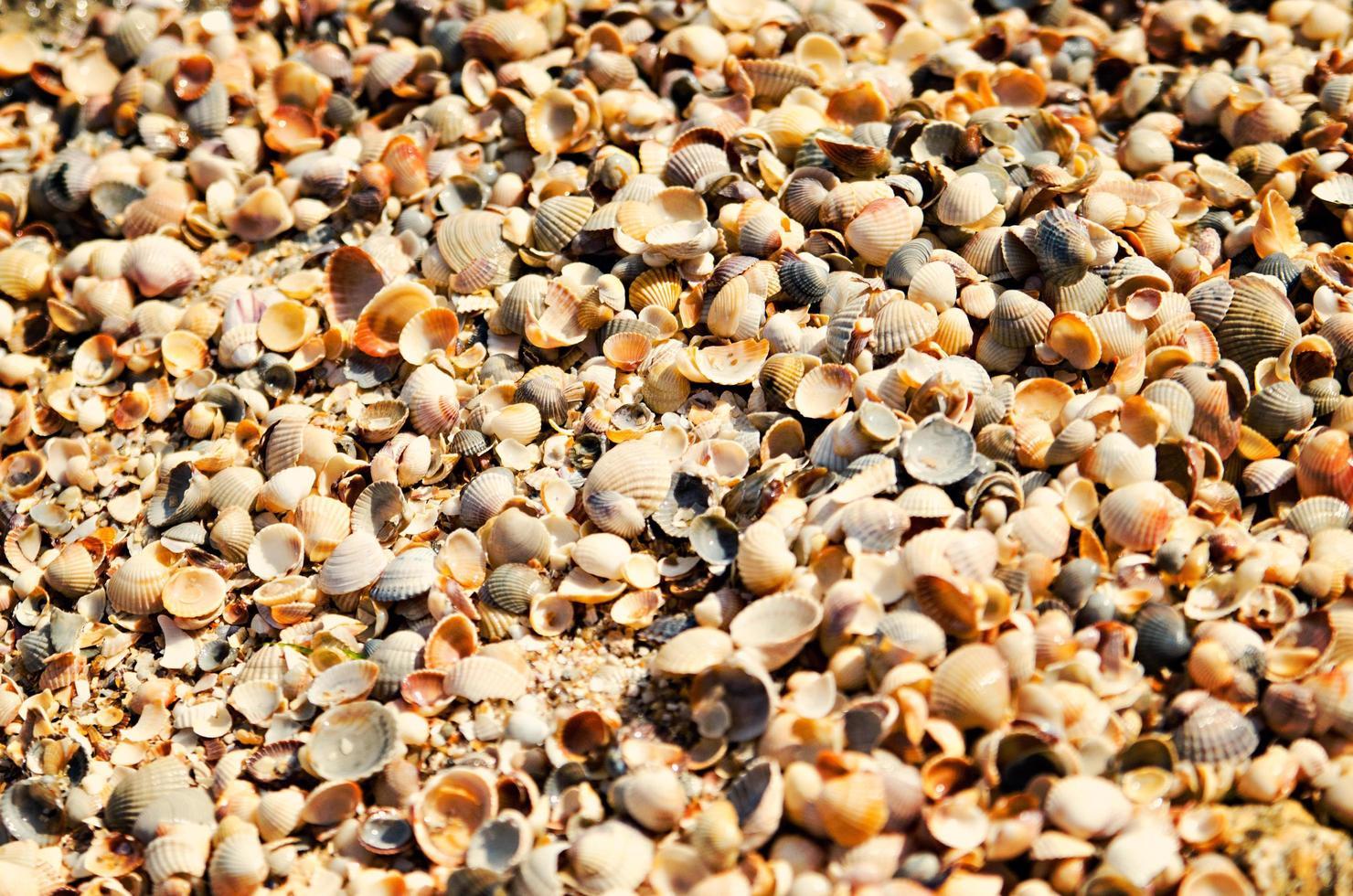 grupo de conchas marinas foto