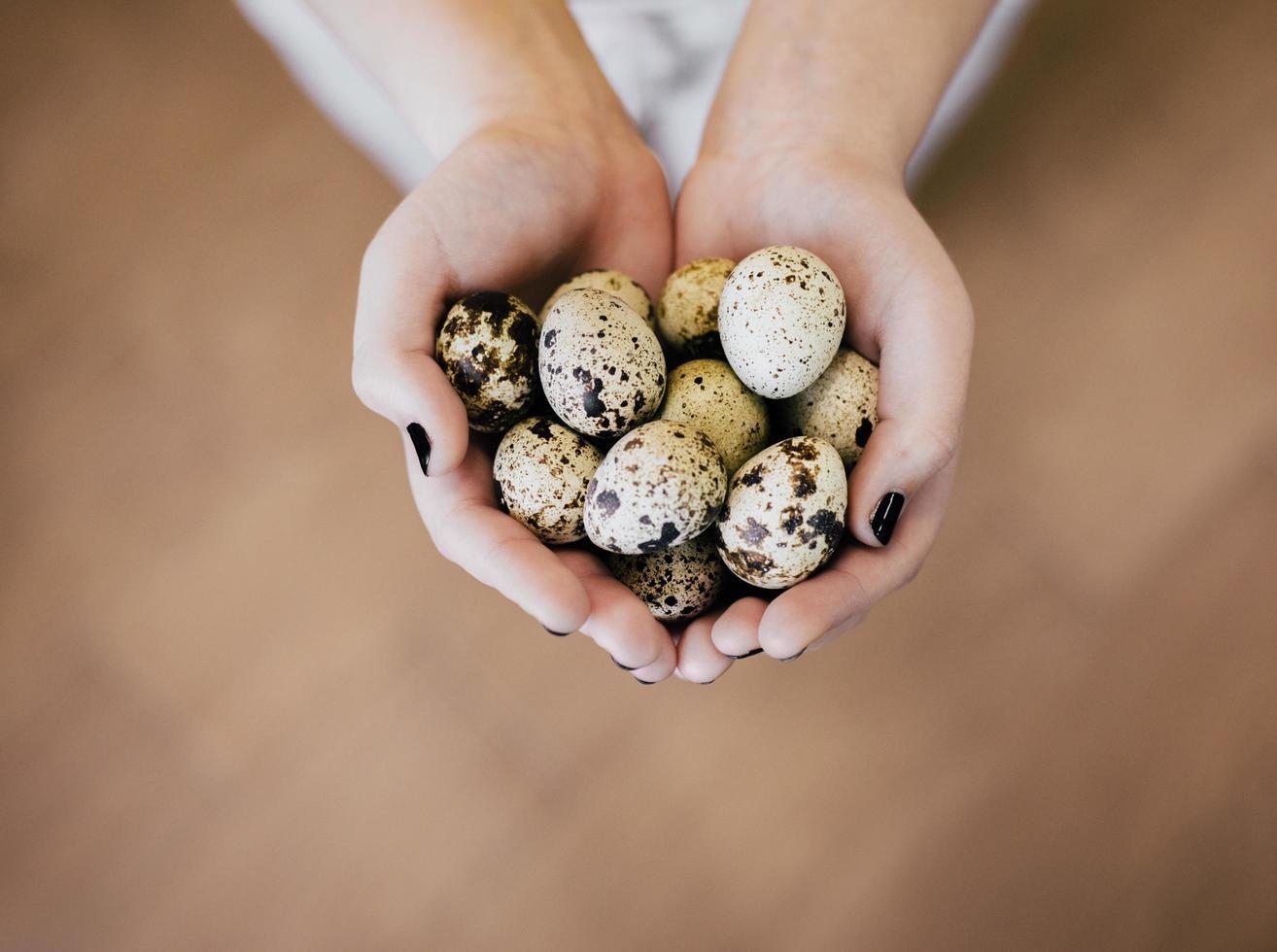 Quail eggs in hands photo