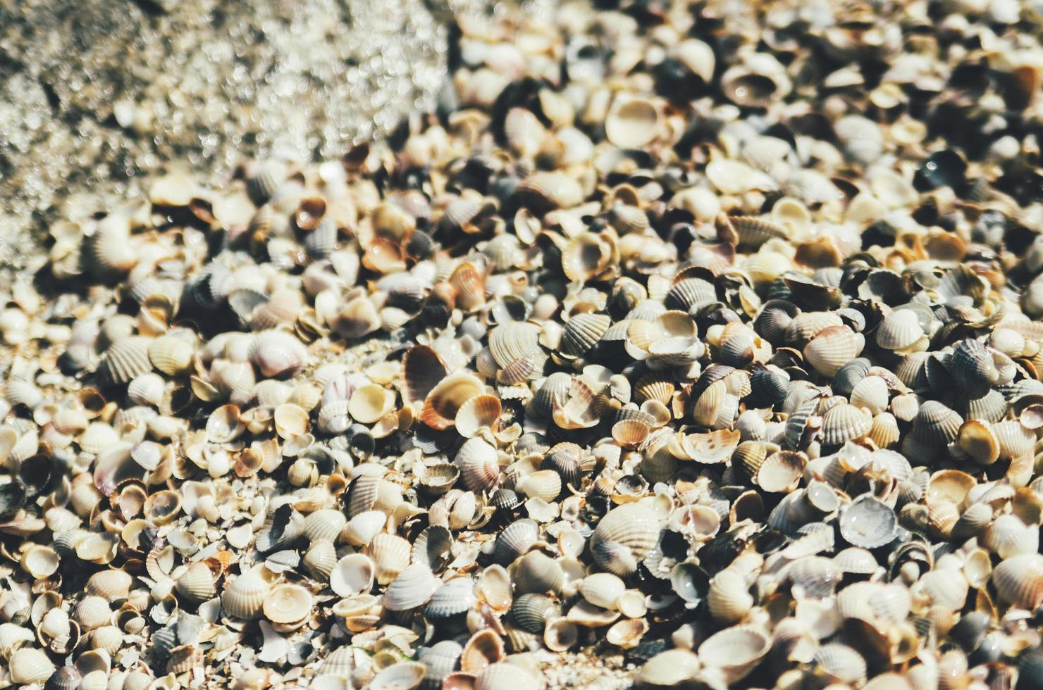 Seashell pile texture photo