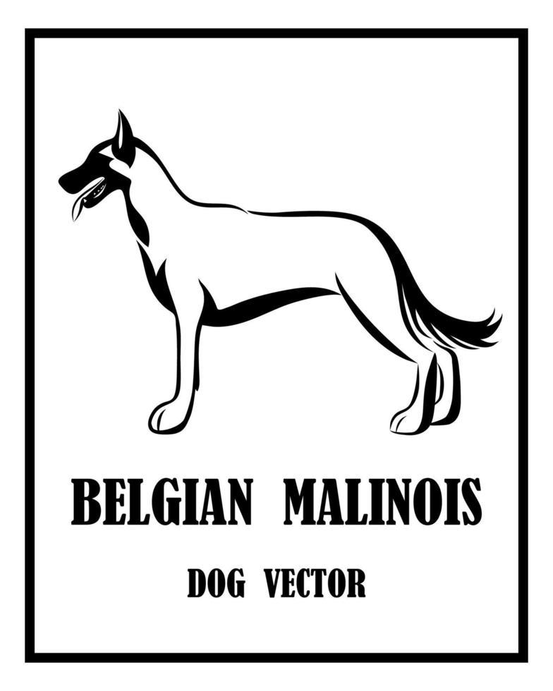 Belgian Shepherd Malinois vector dog eps 10