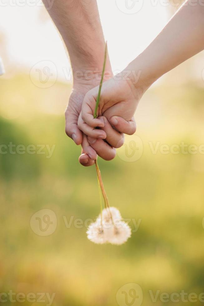 Young loving couple holding hands with each other with a bouquet of dandelions in summer park, view of hands. A pair of hands holding a dandelion photo