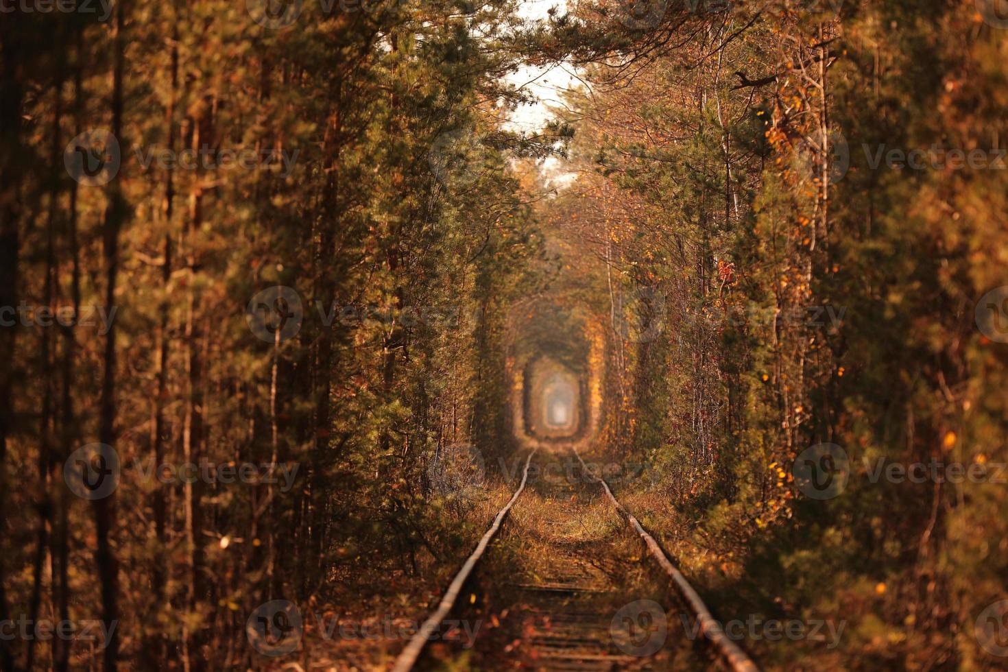 Tunnel of Love. Tunnel of Love in Ukraine. A railway in the autumn forest tunnel of love. Old mysterious forest. photo