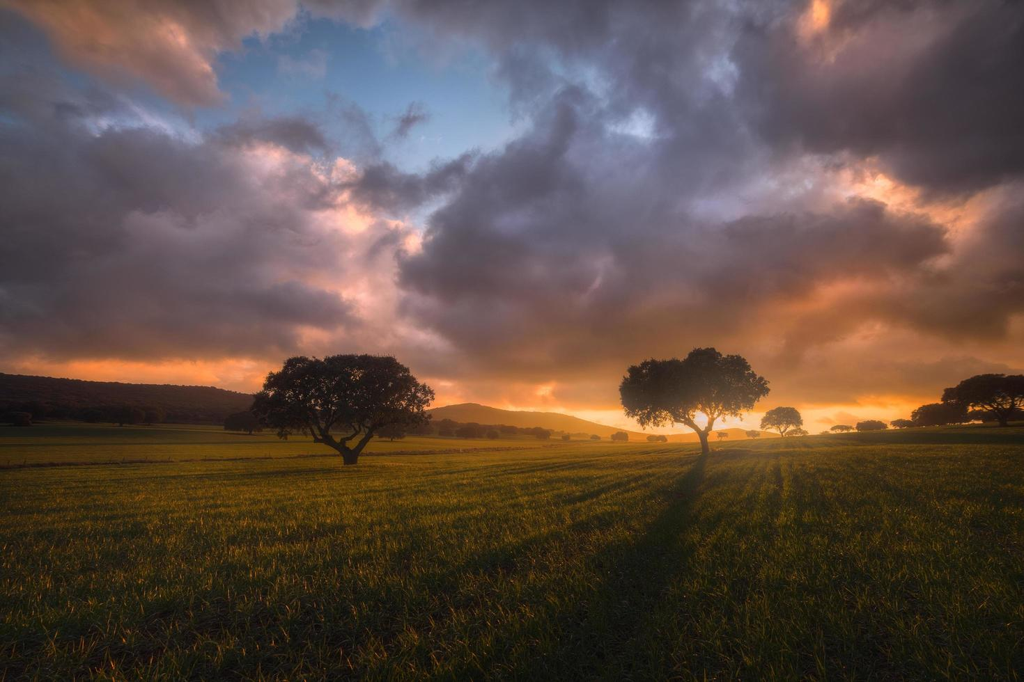 Beautiful warm sunset with bright and colorful clouds and blue sky over a green wheat field with two trees in the background after a storm photo