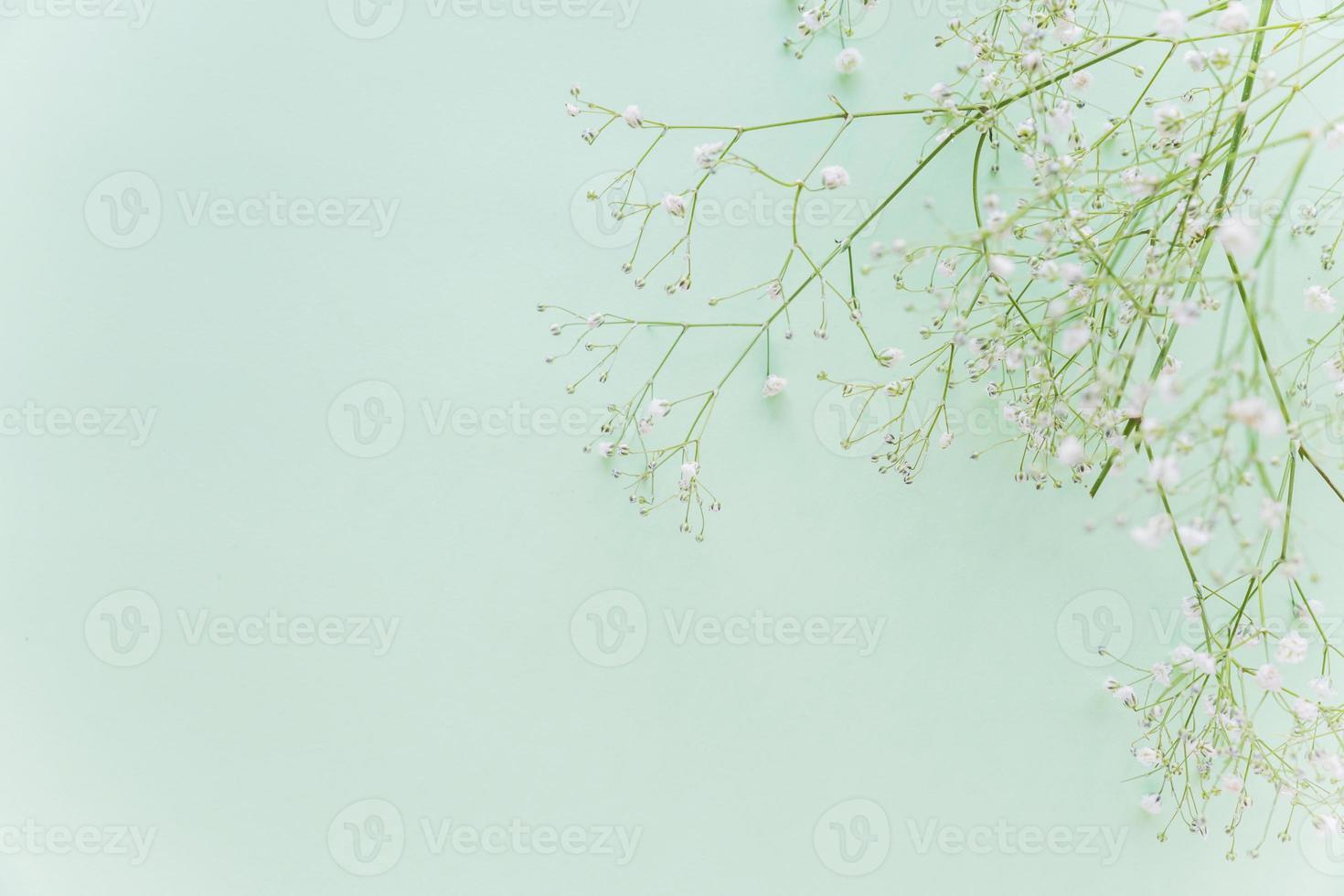 Ramas de flores verdes sobre fondo de menta foto