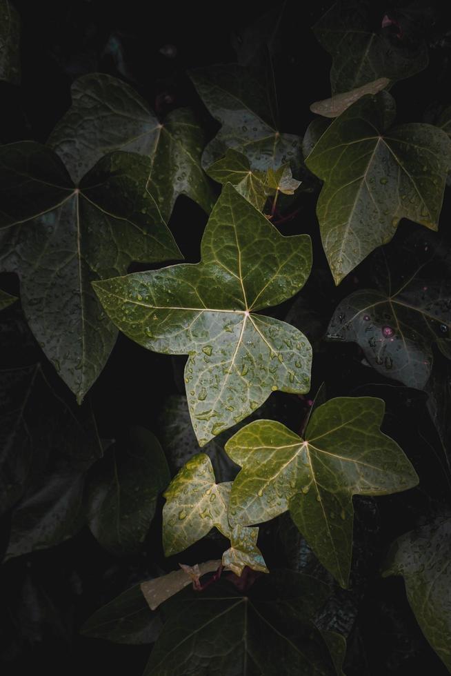 hojas de plantas verdes en la temporada de primavera, fondo verde foto