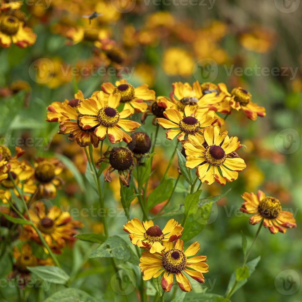 bonitas flores doradas foto