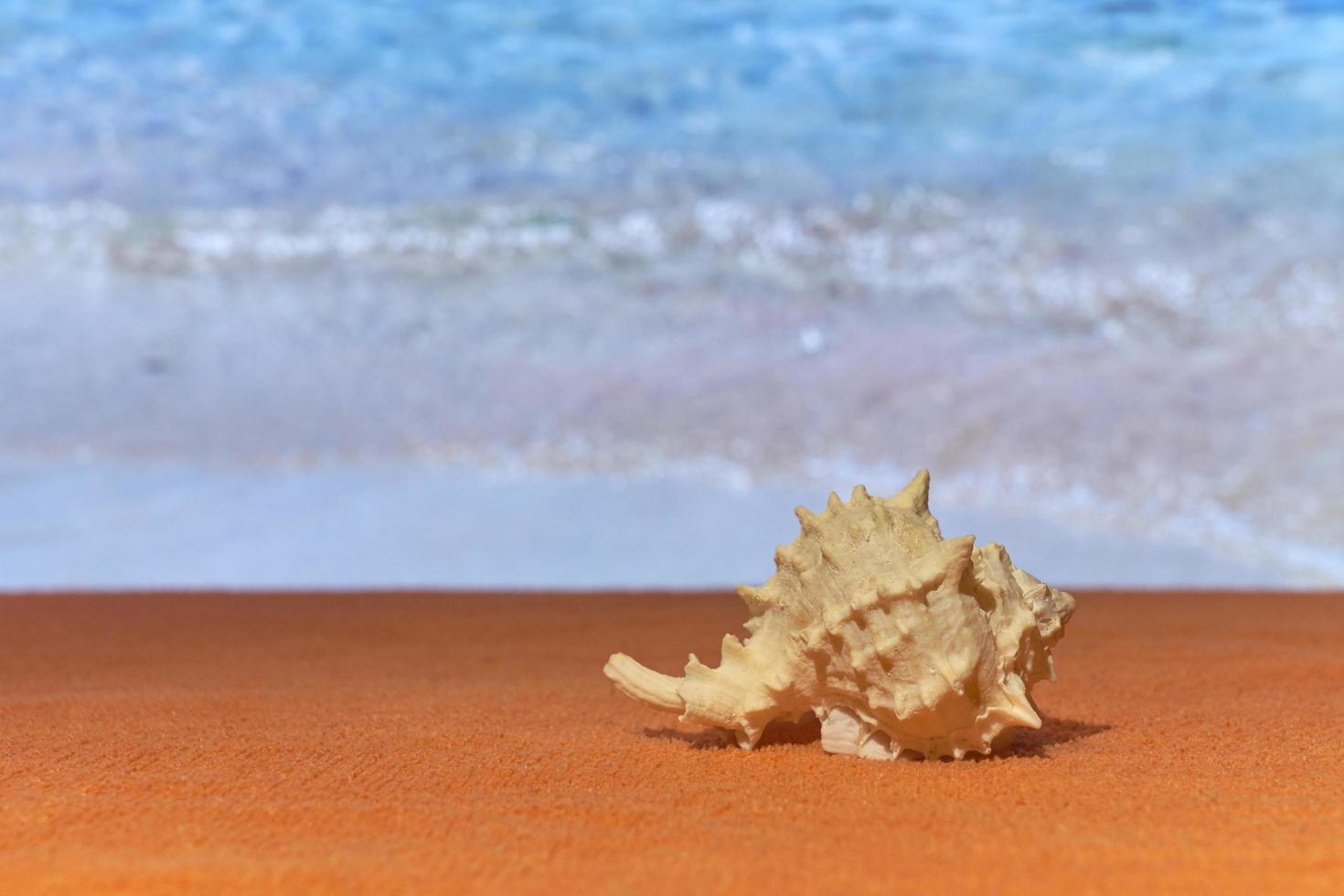una concha al sol con el mar borroso en el fondo. foto
