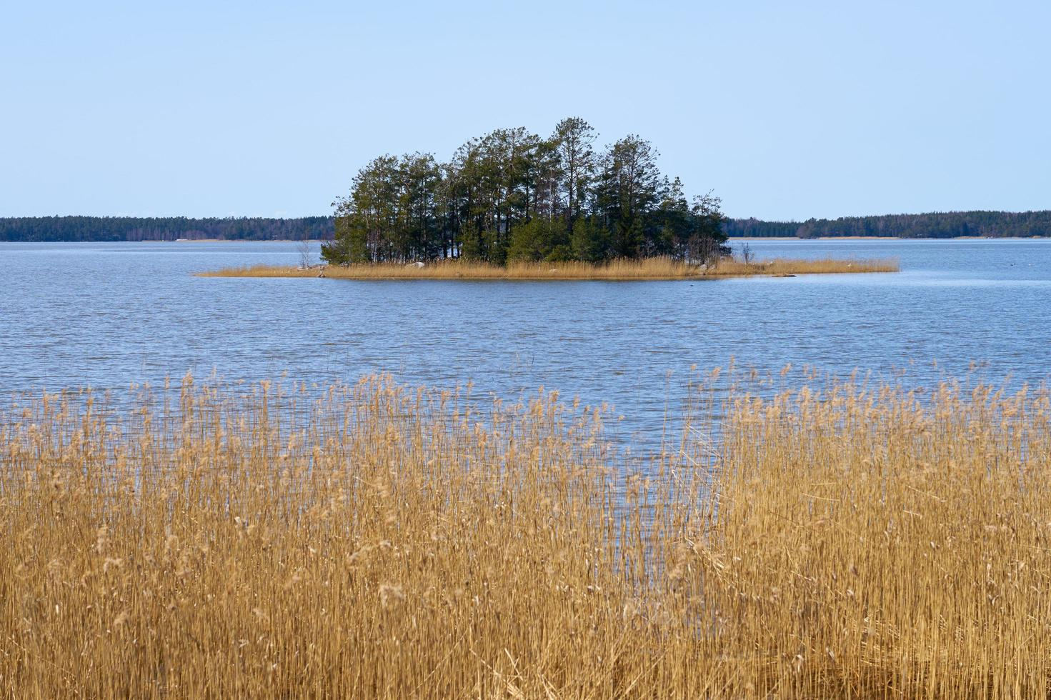 Dry plants on the Baltic Sea coast in Finland in the spring. photo