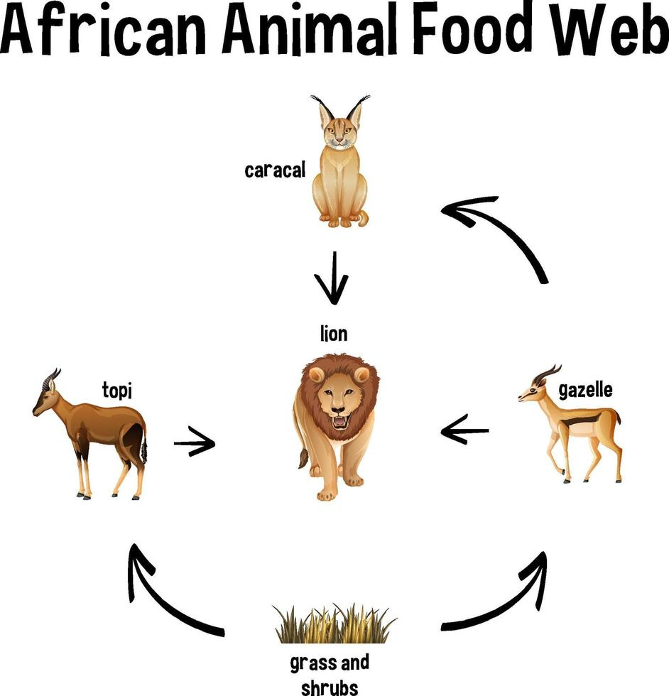 African Animal Food Web for education vector