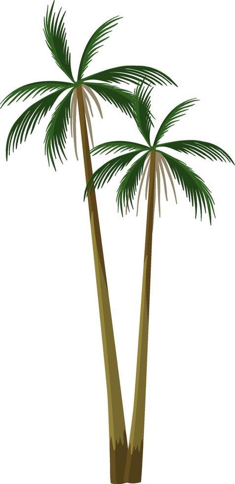 Palmera planta tropical aislado sobre fondo blanco. vector