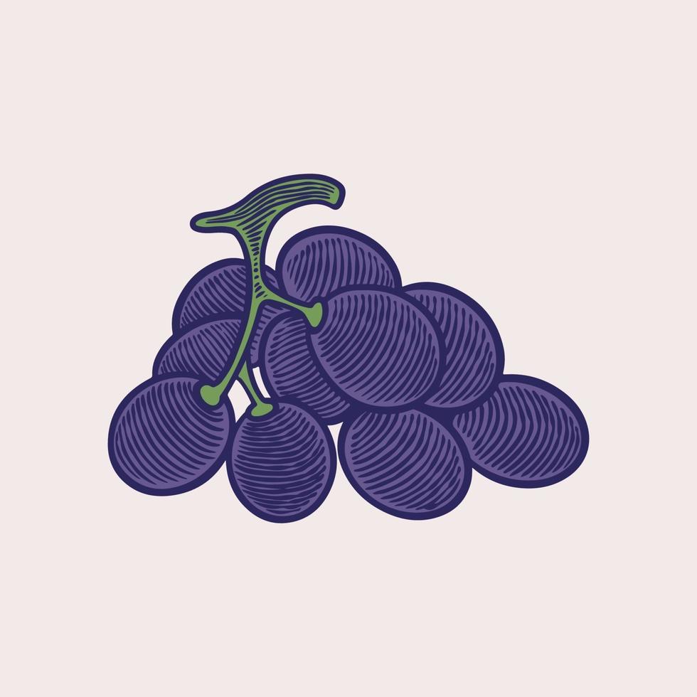 vector dibujo ilustración racimos de uva. diseño dibujado a mano de uvas moradas de color. Ilustración de grabado antiguo vintage para vino de diseño
