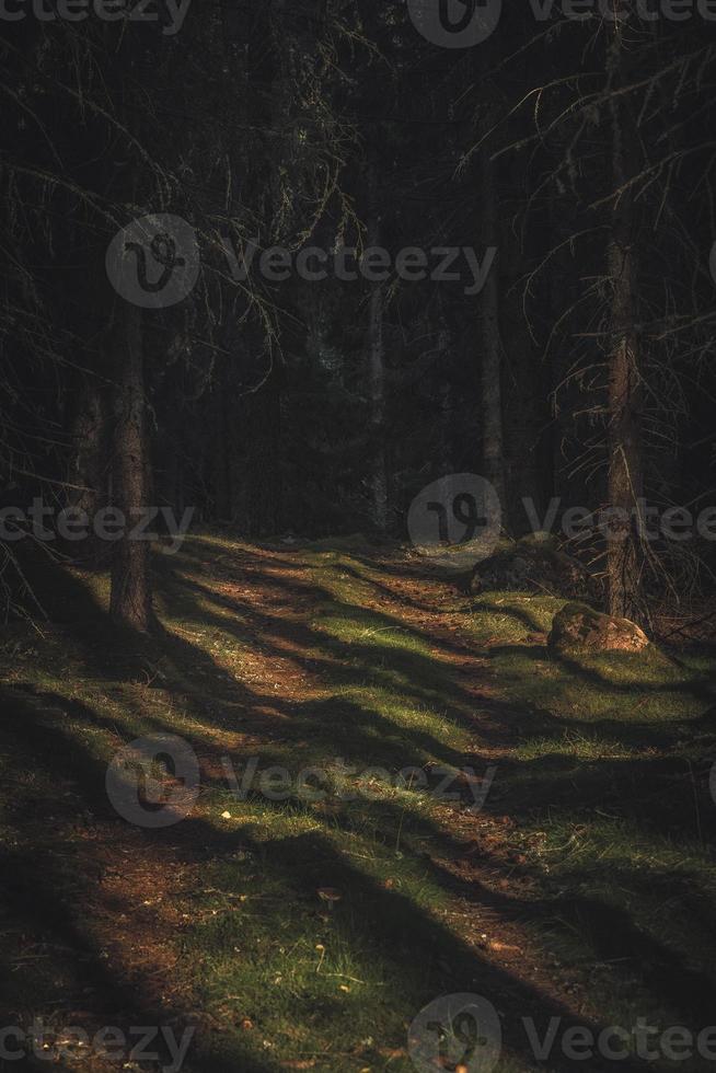 sendero en un bosque profundo y oscuro foto