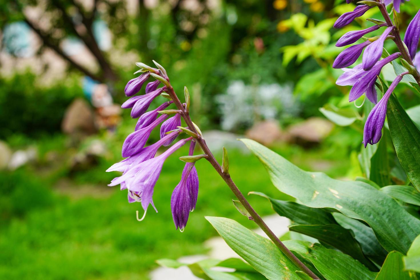 Flores de color púrpura en un parterre en un jardín. foto