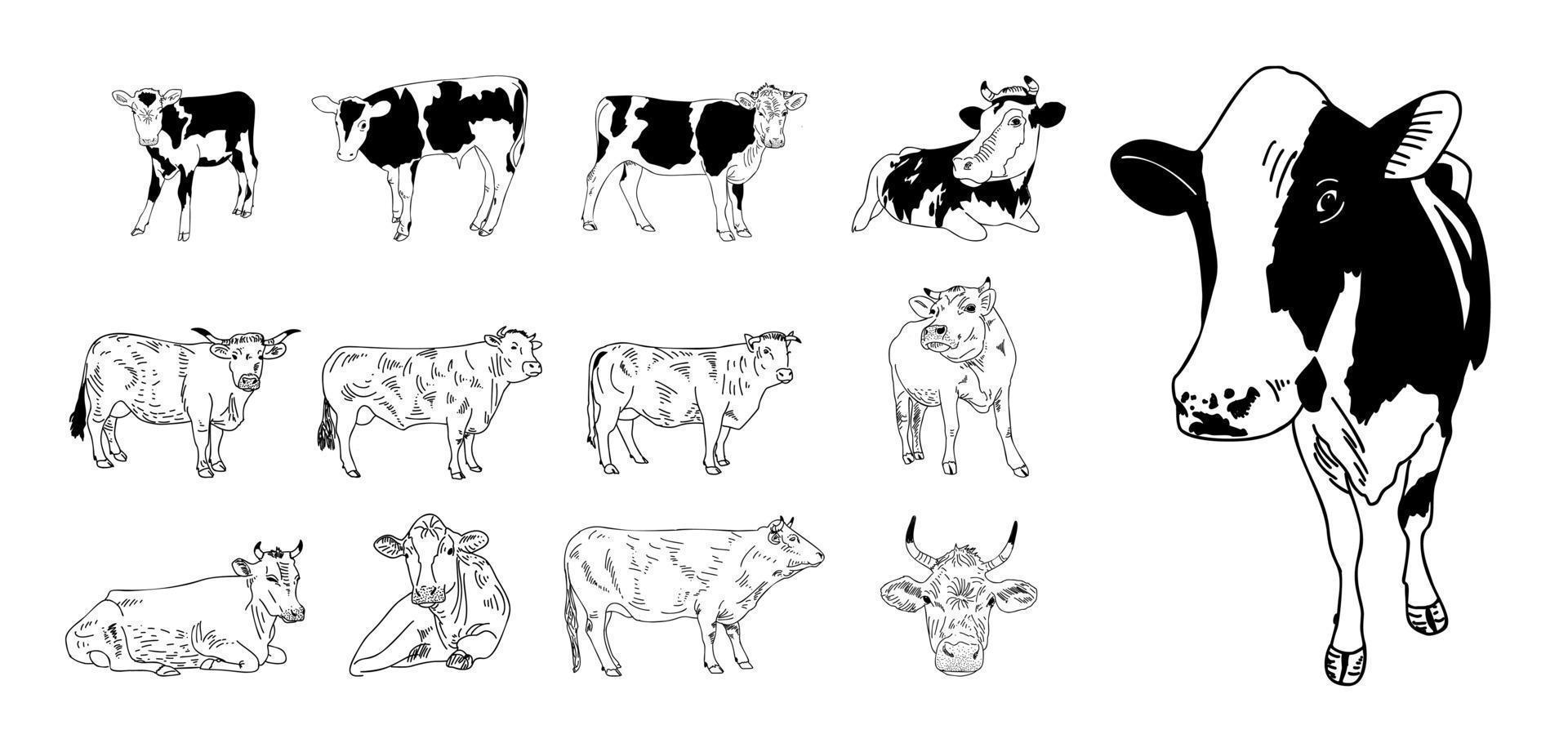 vaca aislada en blanco, ilustración vectorial dibujada a mano. vector