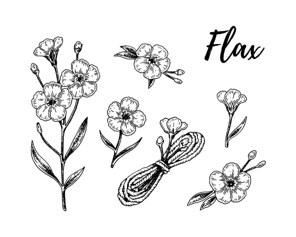 conjunto de flores de lino dibujadas a mano, ramas y elementos textiles de lino. ilustración vectorial en estilo boceto para semillas de lino y envases de aceite vector