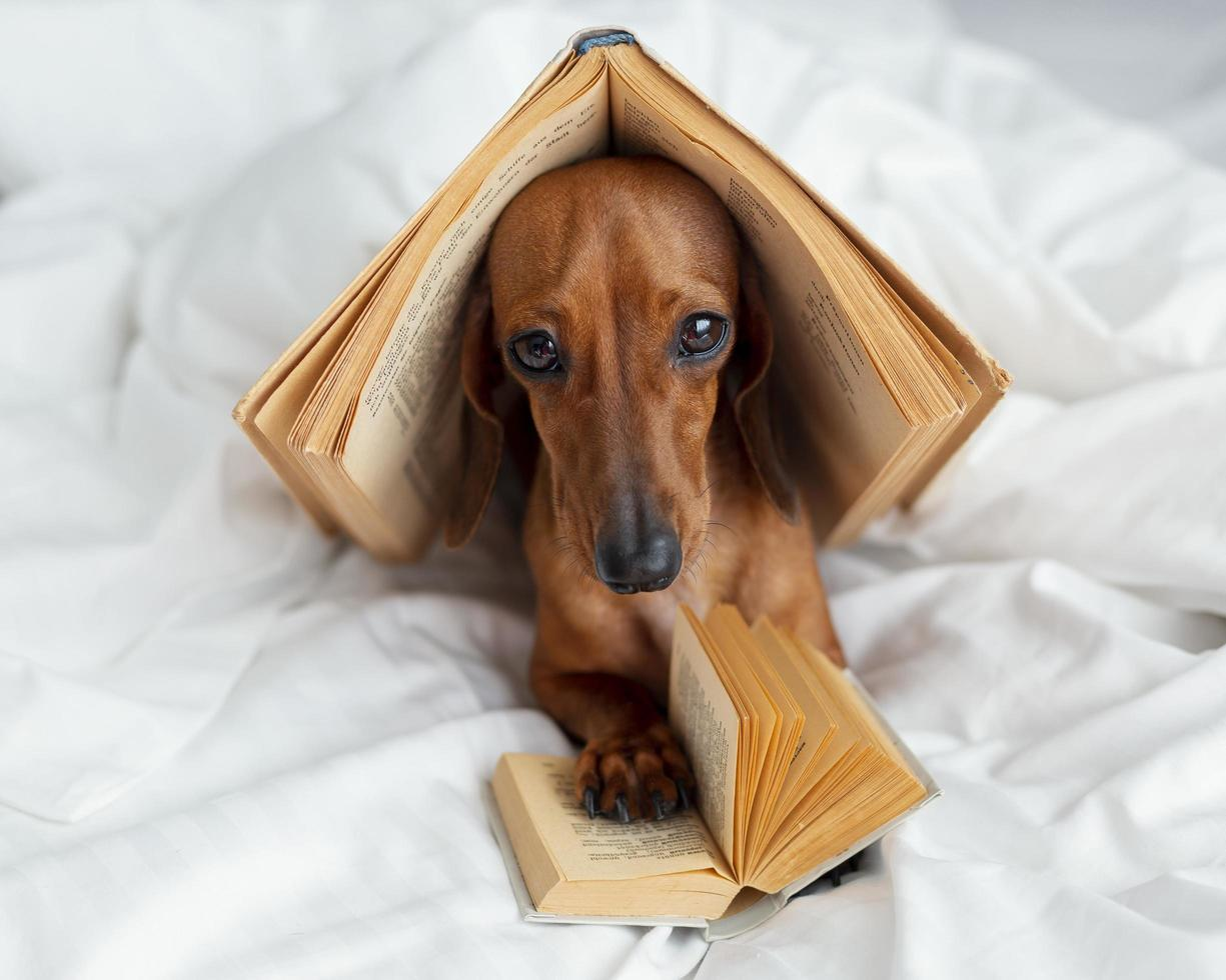 Cute dog with books in bed photo