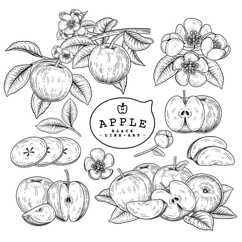 conjunto decorativo de vector de boceto dibujado a mano de manzana entera y rebanada