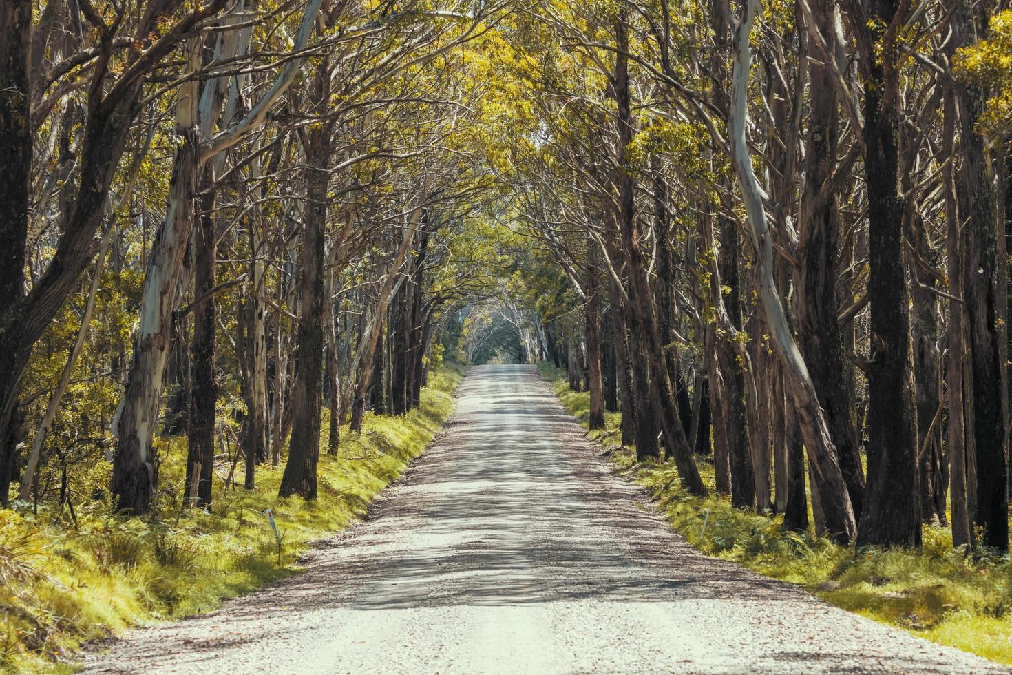Un largo camino de tierra en el parque nacional Kanangra-Boyd en la región de Australia. foto