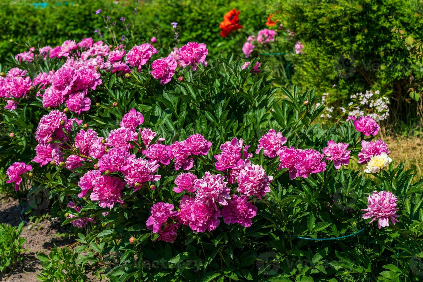 Pink group of flowers photo