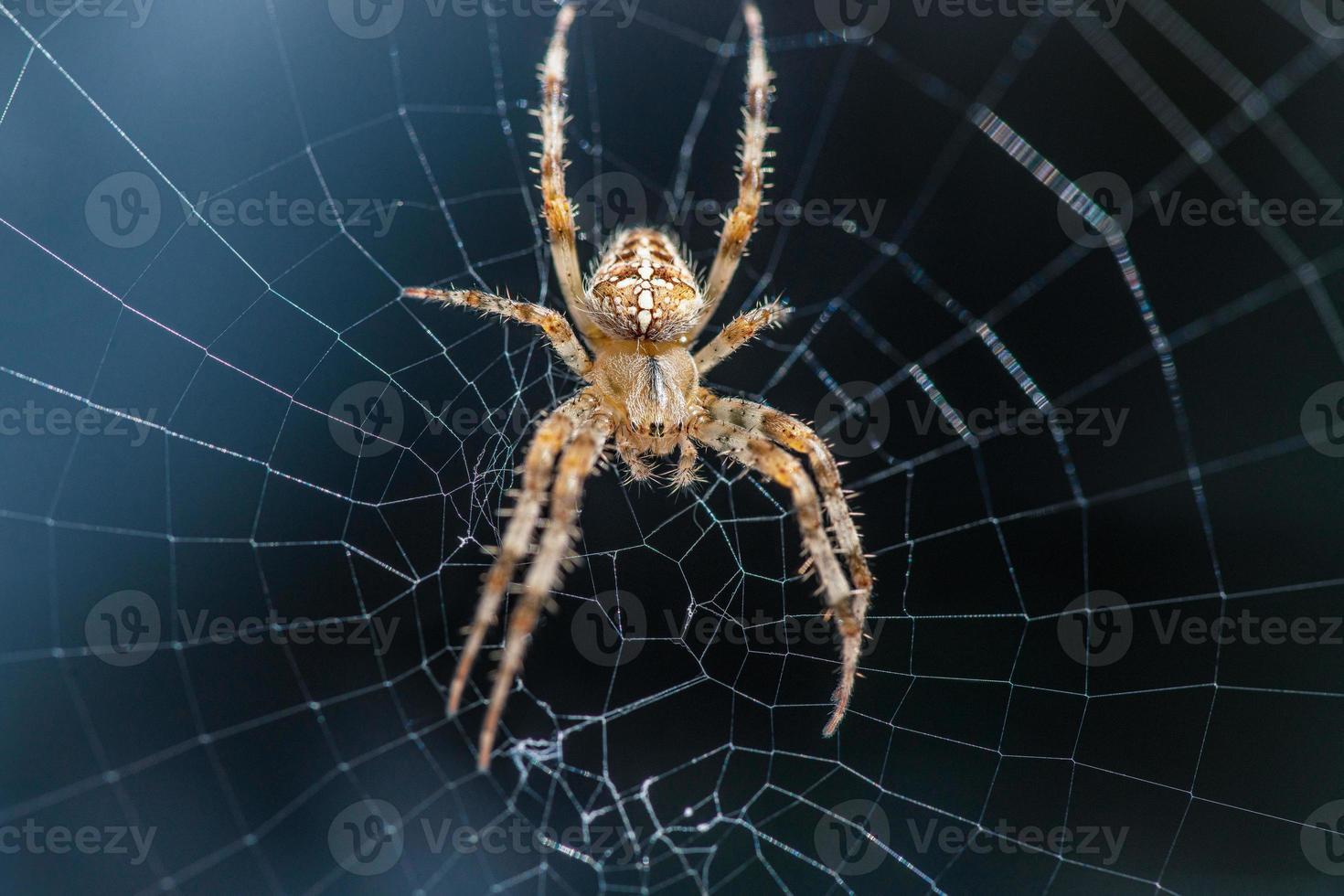 araña cruzada sentada en el centro de la telaraña foto