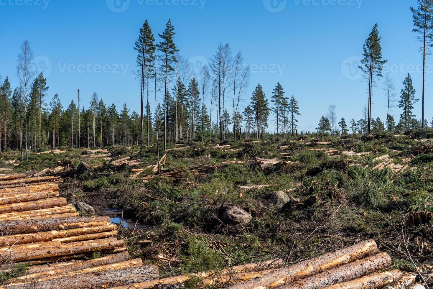 área de tala con madera y ramas en el suelo foto