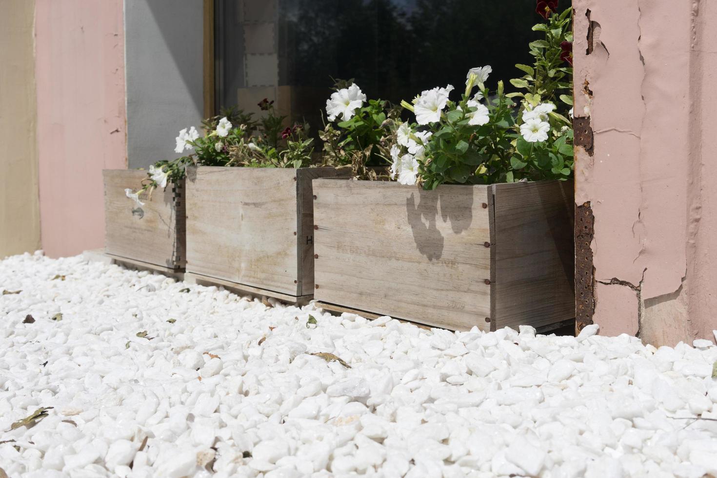 flores blancas en cajas de madera contrachapada sobre un fondo de piedras. foto