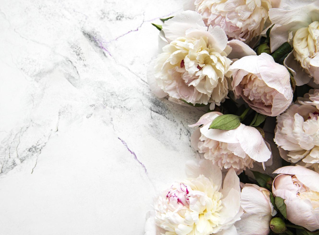 flores de peonía sobre un fondo de mármol foto