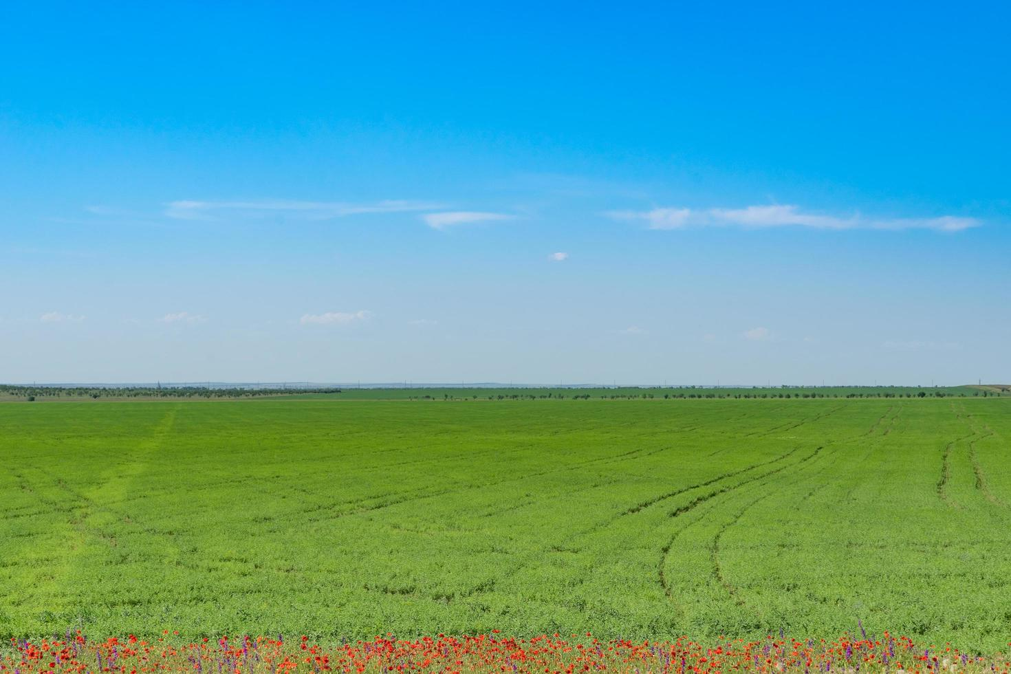 Natural landscape with green field, red poppies on the edge and blue sky. photo
