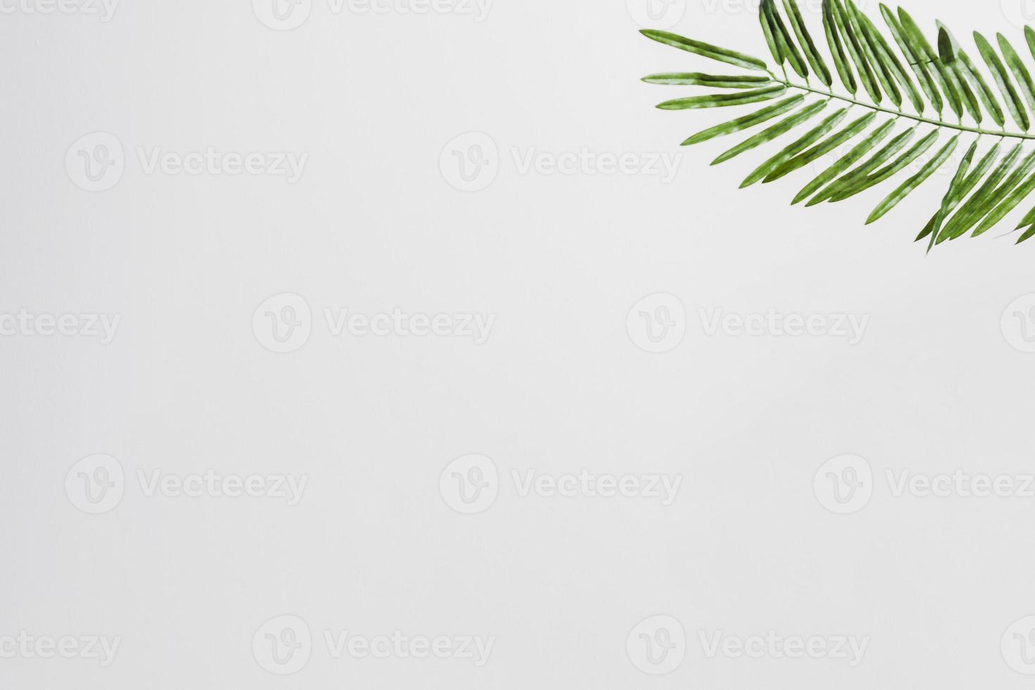 hojas de palma verde natural en la esquina del fondo blanco foto