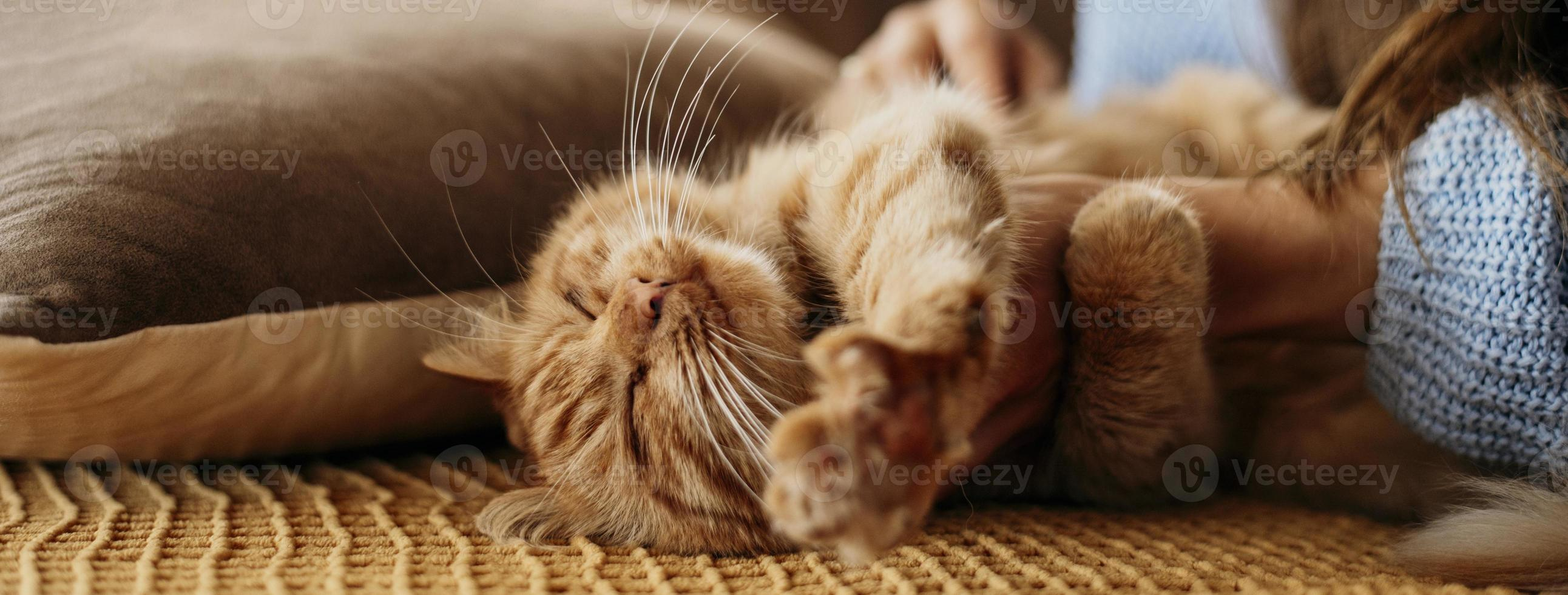 Owner petting adorable cat photo