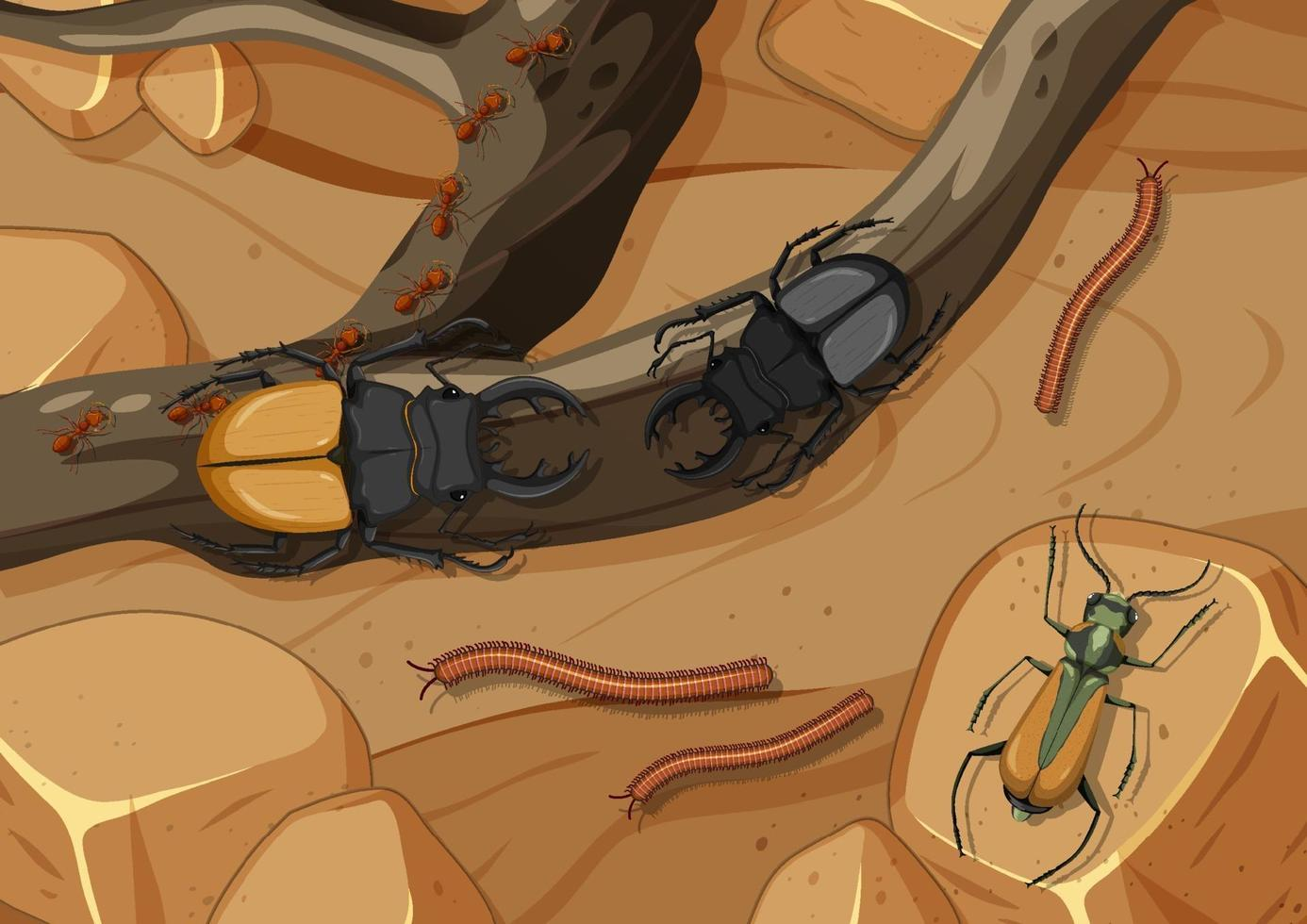 Aerial scene with stag beetles and millipede vector