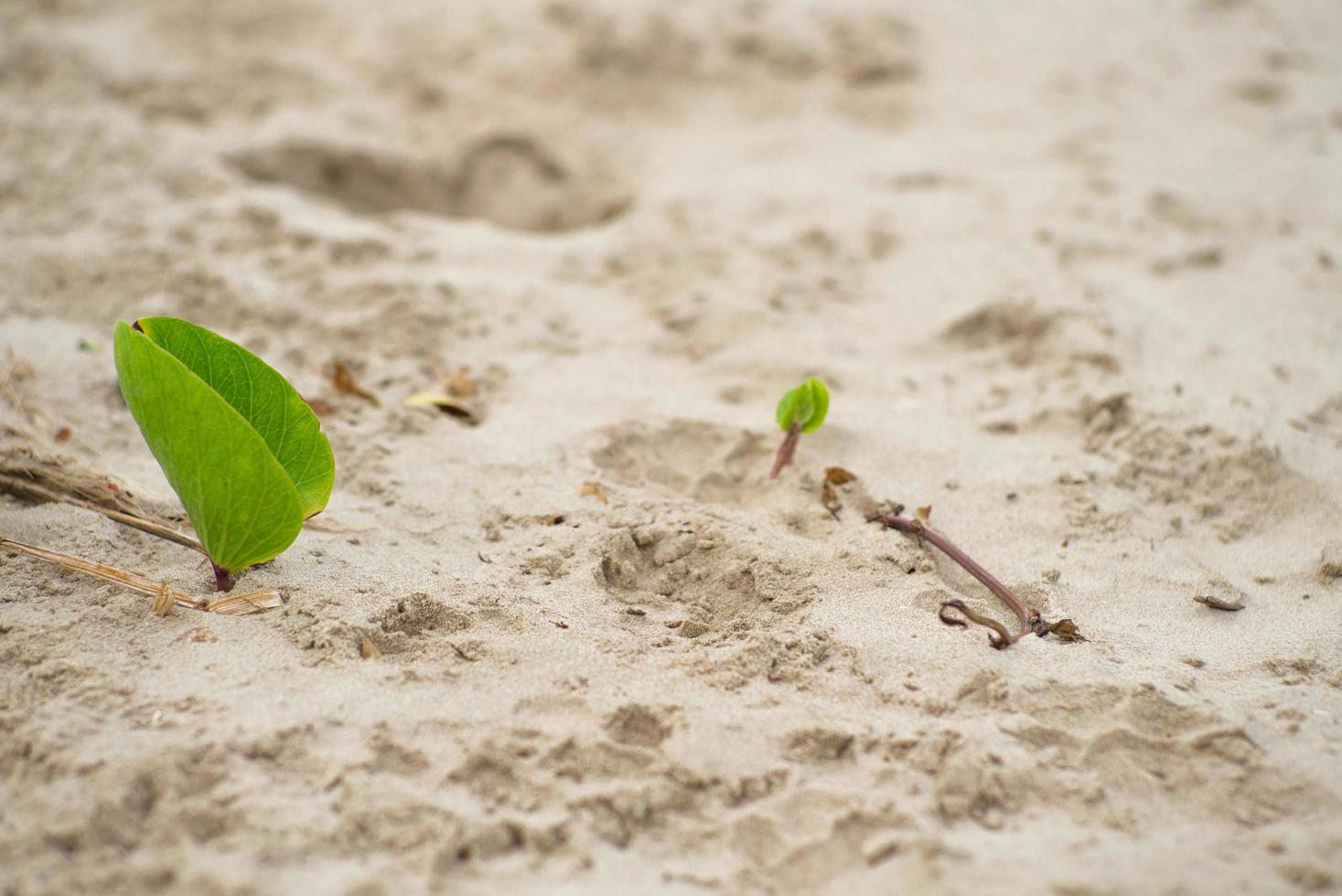Closeup picture of biennial plants on the beach. photo