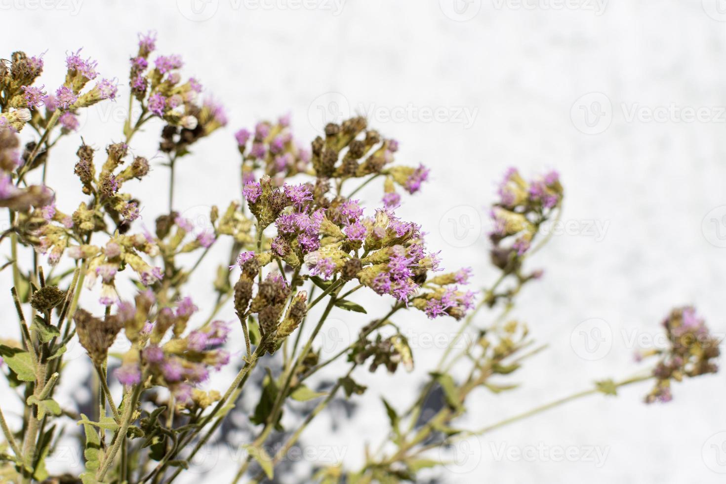 Purple flowers on a bush photo