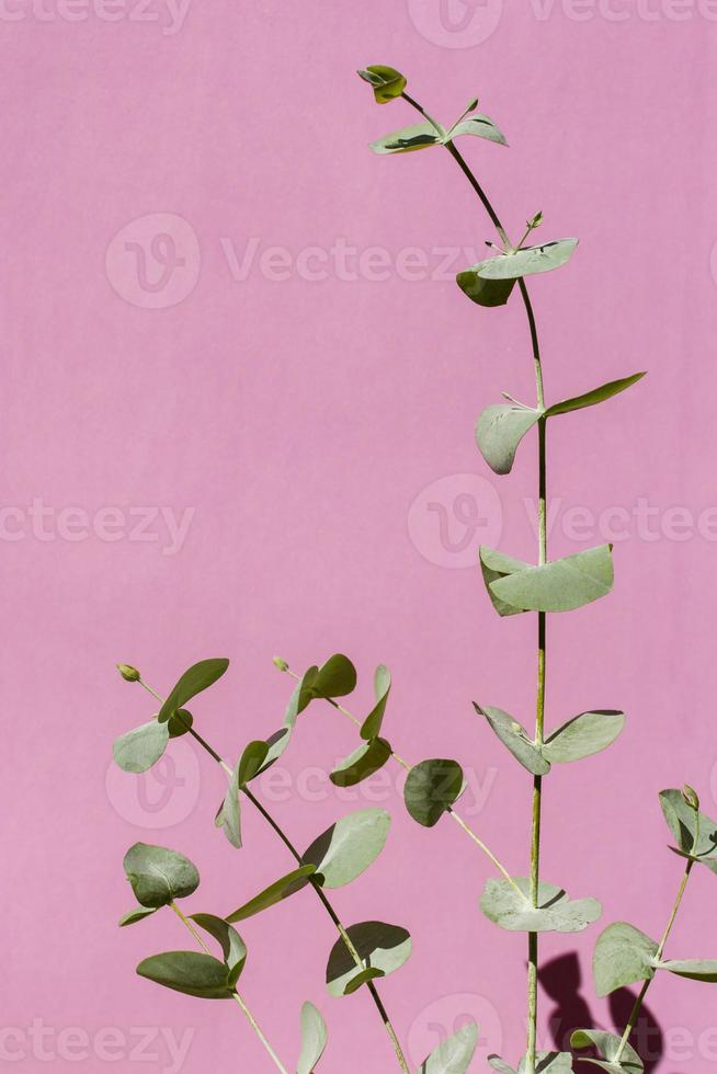 Green plant on pink background photo