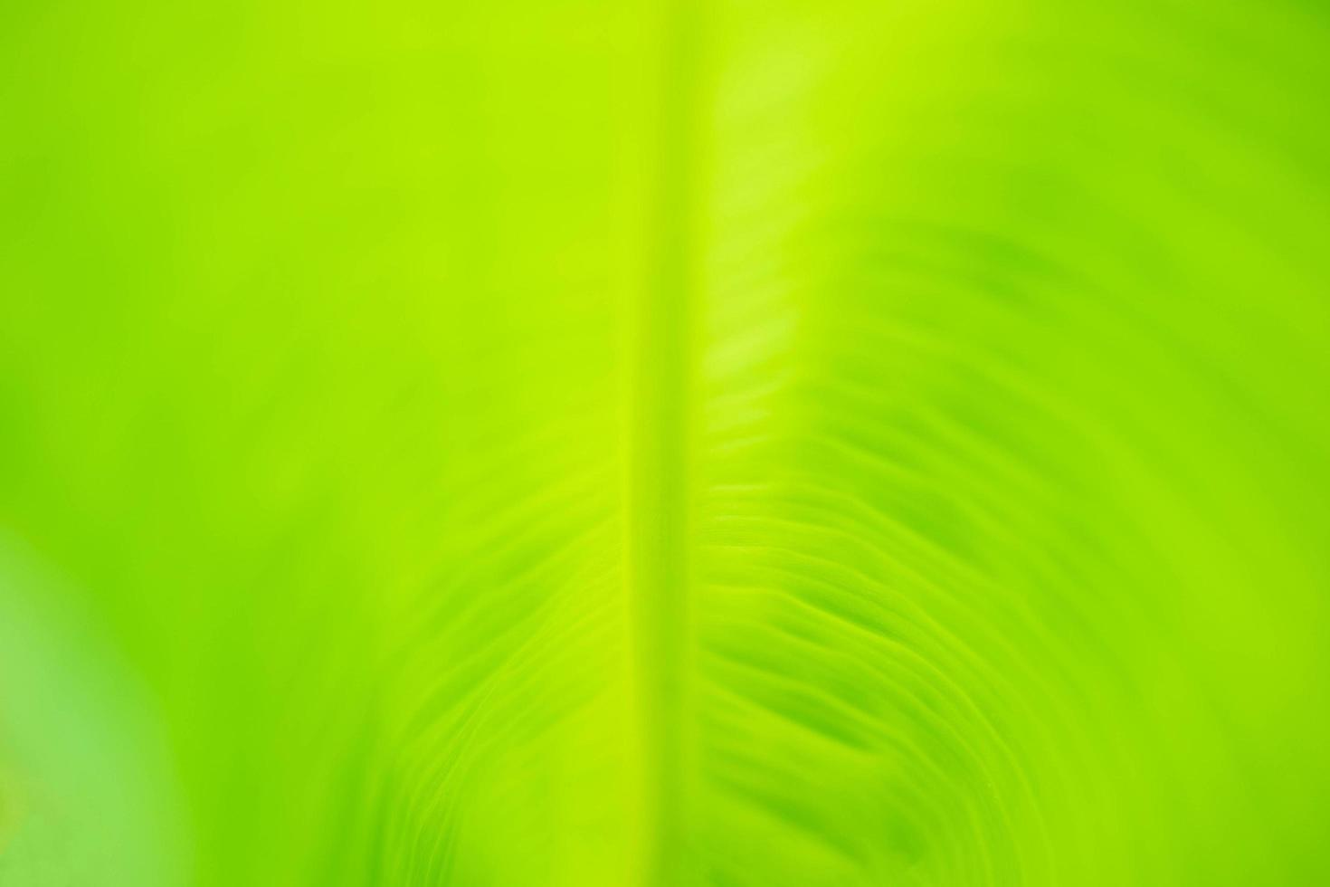 Green nature background. photo