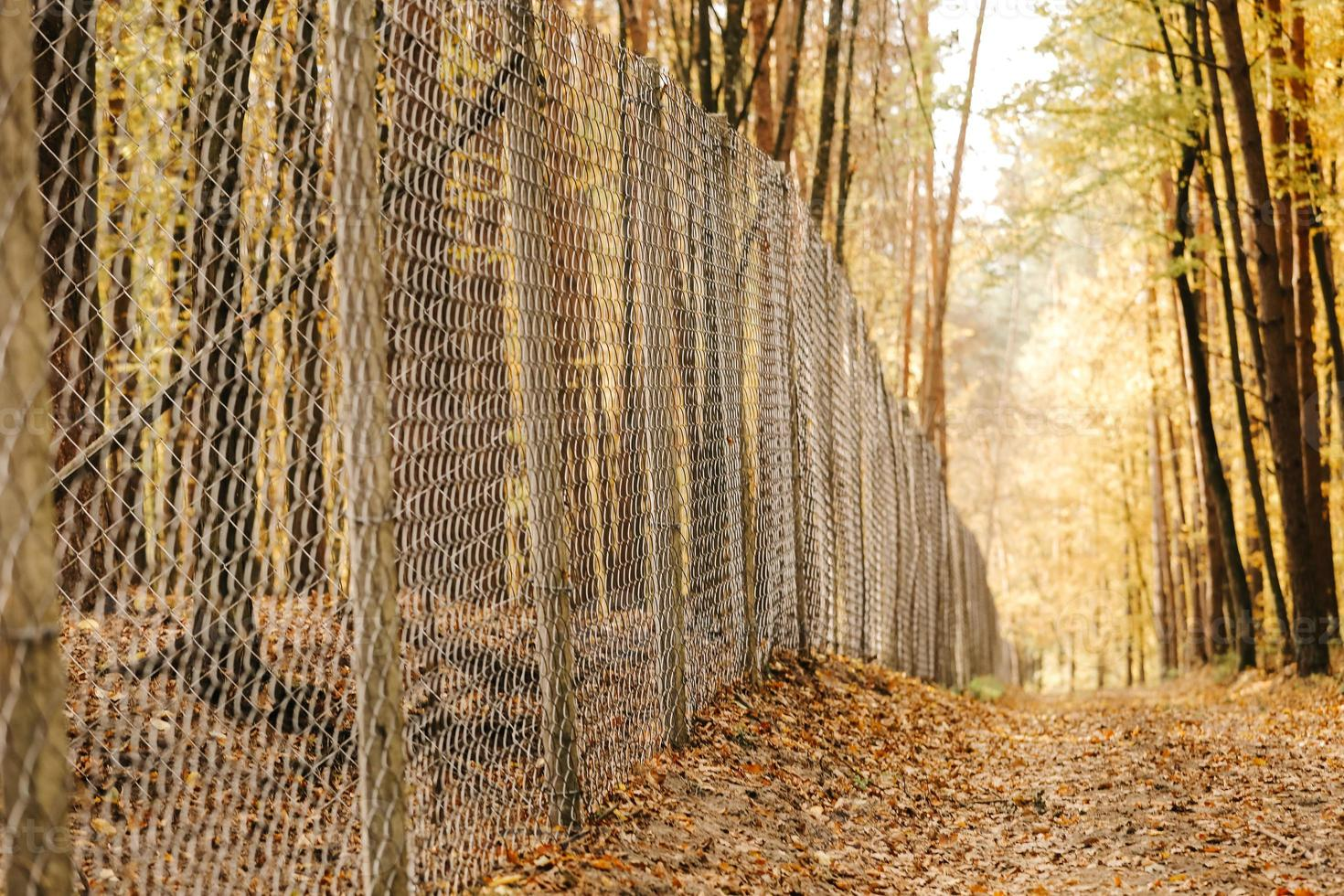 Outdoor metal fence in autumn photo