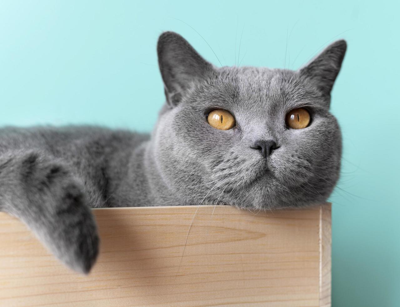 Cute grey cat lying in a crate photo