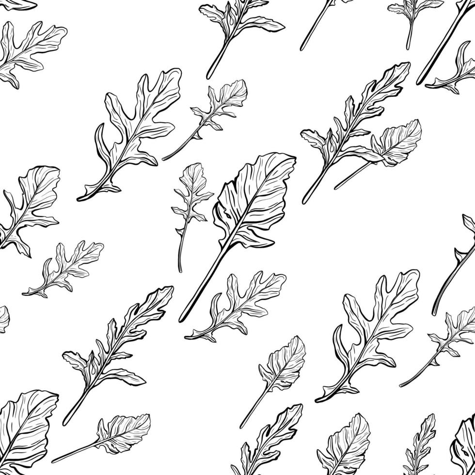 Arugula seamless pattern. Arugula leaves on a white background. Spicy and aromatic Italian seasoning. Hand-drawn vector illustration