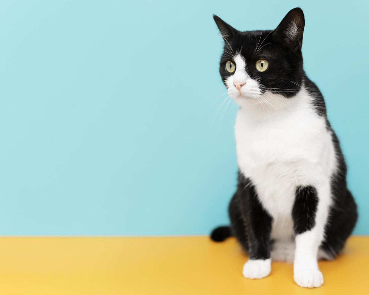 Adorable black and white kitty with monochrome wall behind her photo